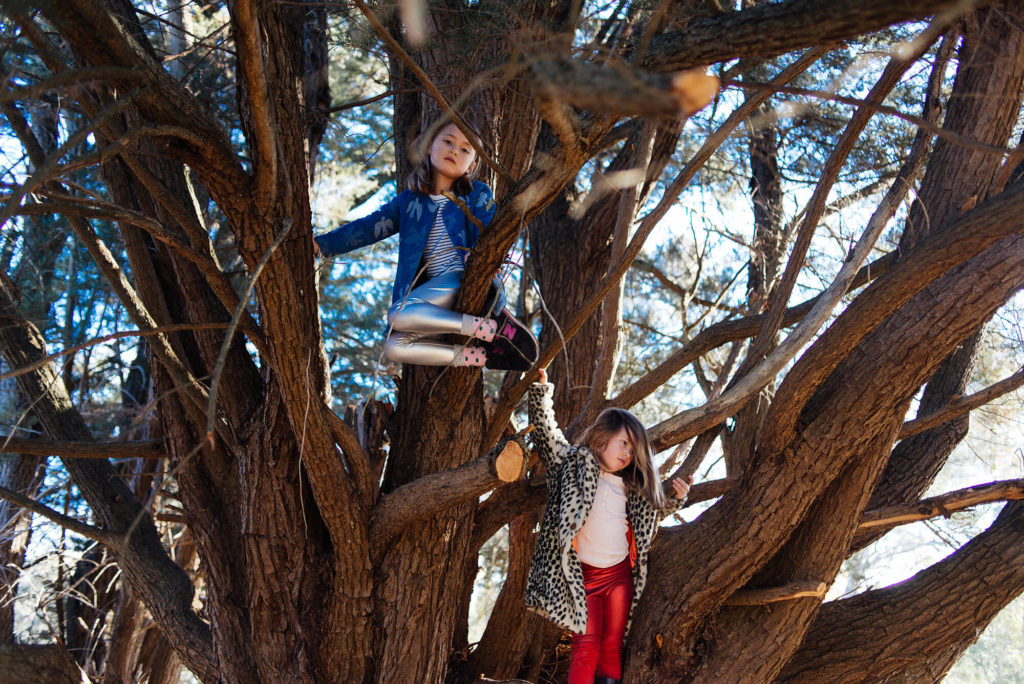 Two young girls climbing cypress tree wearing bright clothing